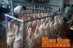 广东烧鸭培训做法入炉前,如何处理光鸭表皮油污?